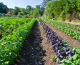 Farming for a Small Planet: Agroecology Now